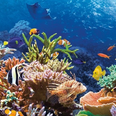 Coral Reef Fishes, Castorland Puzzle 1000 pc