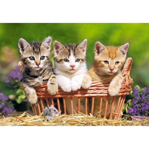 Three Lovely Kittens, Castorland Puzzle 500 pcs