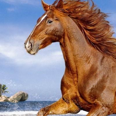 Horse on the beach, Castorland Puzzle 500 pcs
