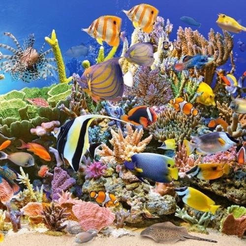 Underwater Life, Castorland puzzle 4000 pc
