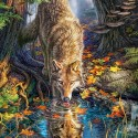 Wolf in The Wild, Castorland puzzle 1500 pc