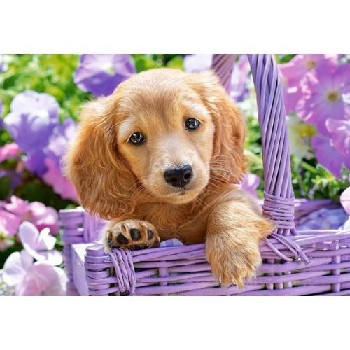 Puppy in Basket, Castorland Puzzle 1000 pc