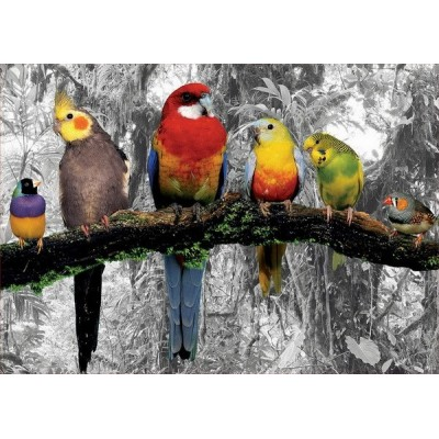 Birds on the jungle, Educa Puzzle 500 pcs
