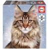 Maine Coon macska, 100 darabos Educa puzzle