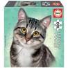 Európai rövidszőrű macska, 100 darabos Educa puzzle